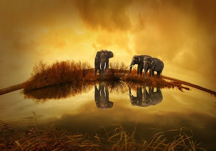 Inspiration Nature Photos Transcendent Moments Thailand Elephants At Sunset