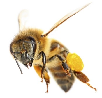 bee honey flying nature quotes 2